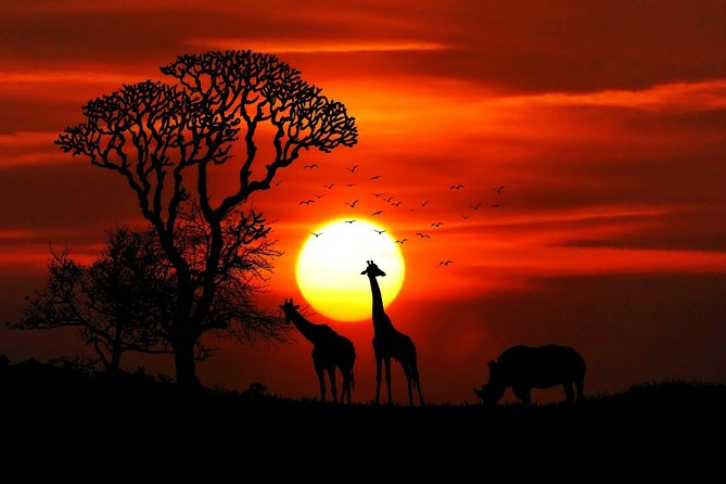 African Safari and Game Drive Mikumi