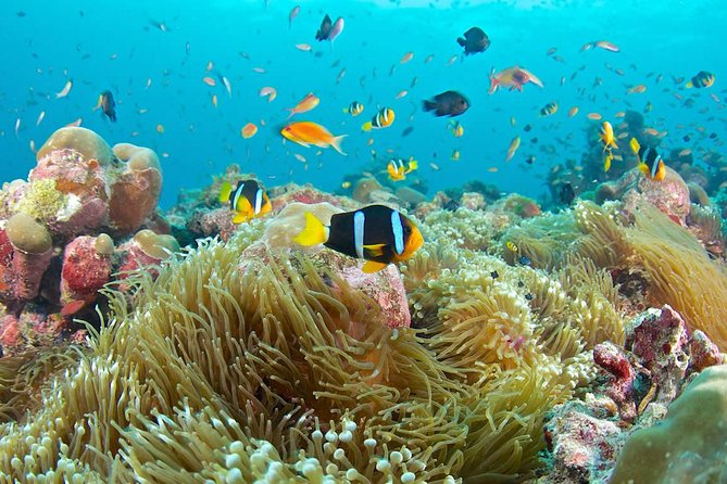 Bali Full Day Tour - Blue Lagoon Snorkeling Tour
