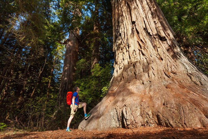 Yosemite National Park & Giant Sequoias 2-daagse semi-begeleide tour (geen accommodatie)