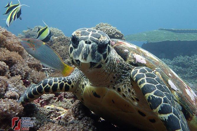 Snorkeling at Tulamben USAT Liberty Wreck