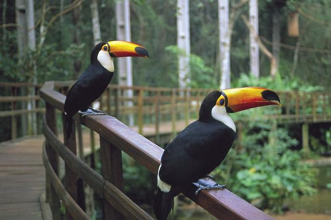 Bird Park Tickets with Round Trip Transfer Included