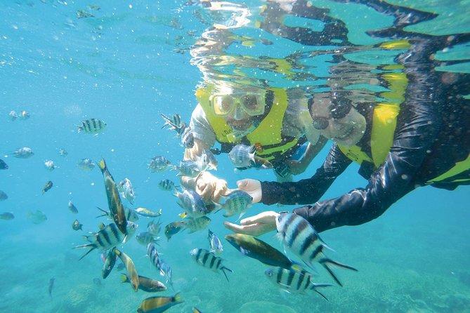 Full Day Snorkeling from Perhentian Island Terengganu