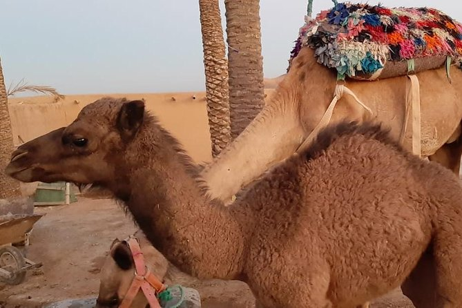 Full day Quad biking and Camels ride with berbere lunch in Agafay Desert