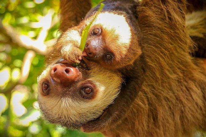 Skip the Line: Diamante Eco Adventure Park: Animal Sanctuary Discovery Ticket