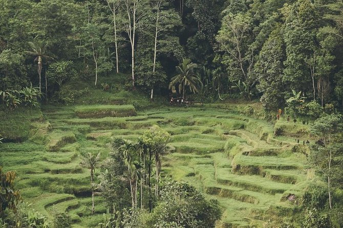 All of Ubud and Jatiluwih Heritage sites (2 Day Tour) photo 13
