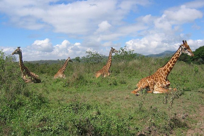 Day Trip Game Drive- Arusha National Park from Arusha Town photo 5