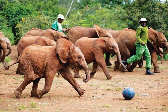 Private Nairobi Layover Tour to Elephant orphanage and Giraffe Center