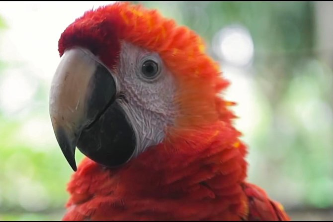 Wonderfull fauna in Iquitos (Low Cost tour)