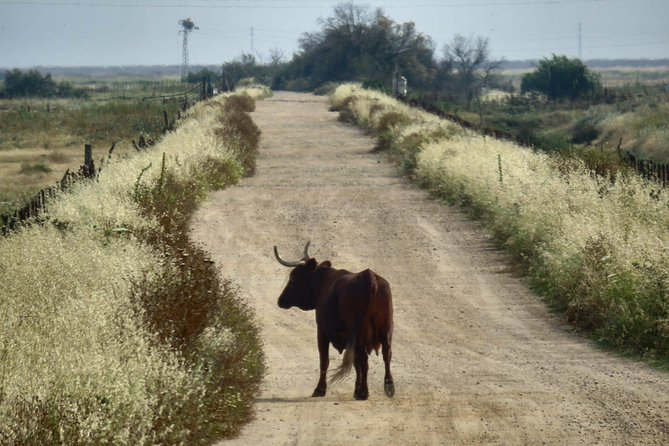 Donana National Park: 4x4 Guided Day Tour from Seville
