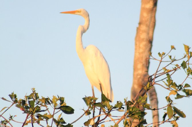 Bird Watching Tour Huatulco HT