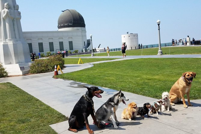 Doggie's taking a selfie at the Griffith Park Observatory
