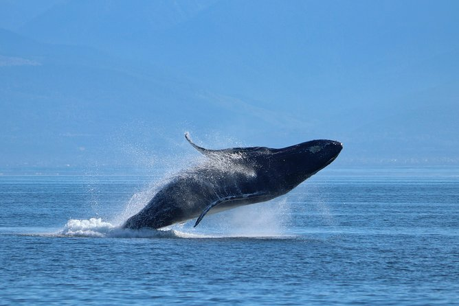 Port Renfrew Whale & Wildlife Watching