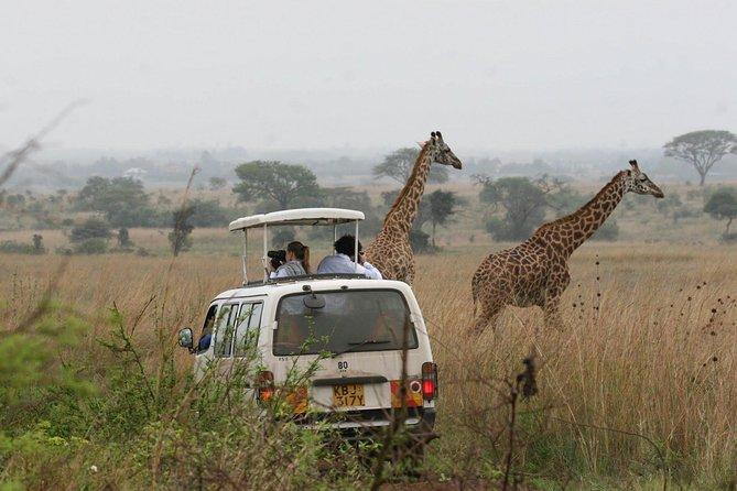 Nairobi Nairobi National Park Tour