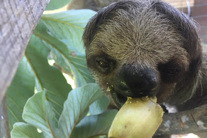Roatan Shore Excursion: Monkeys, Sloths, and Snorkel Adventure