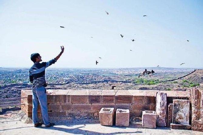Kite Feeding Experience at Mehrangarh Fort, Jodhpur