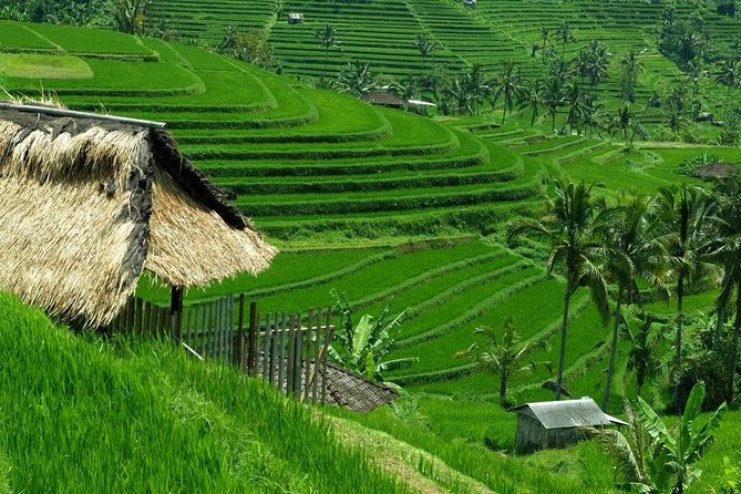 Private Jatiluwih Rice Terraces Heritage Site and Culture Tour