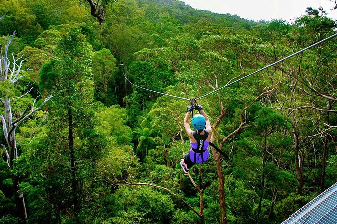 Gold Coast to Treetop Challenge Mount Tamborine
