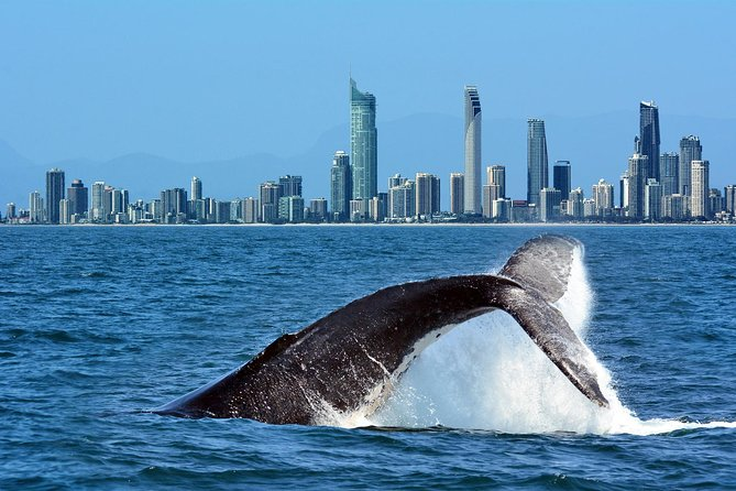 Small Boat Whale Watching Tour with Sea the Gold Coast photo 2