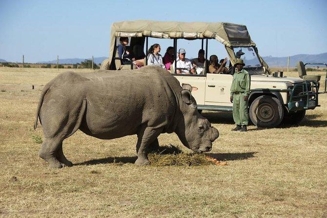 Day trip to Ol Pejeta conservancy from Nairobi