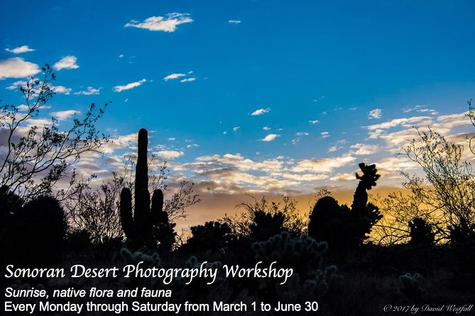 Sonoran Desert Morning 4-hour Photography Workshop