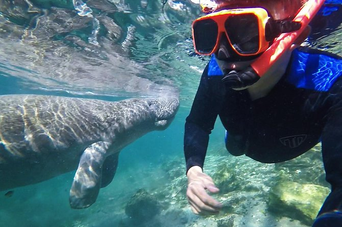 Swim with the Manatees Includes In-Water Guide/Photographer