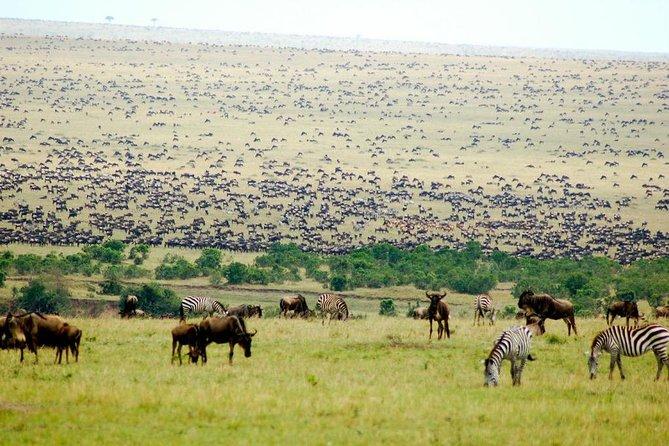 5 Days Serengeti/ndutu Migration Safari Calving Season