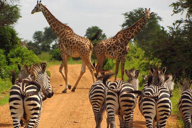 3 Days Camping & Lodging Safari: