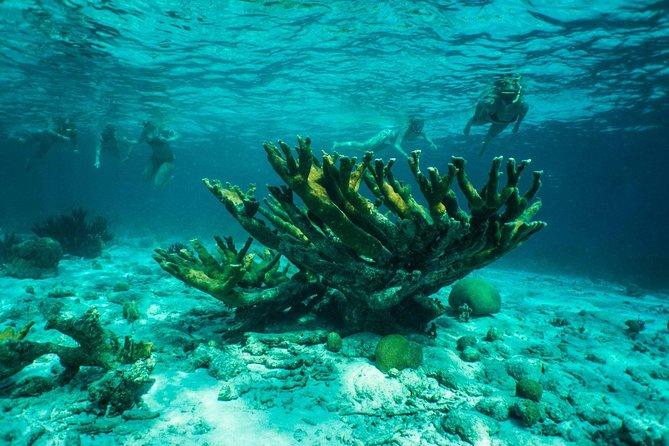 Clearbottom Mangrove Kayak & Snorkel tour