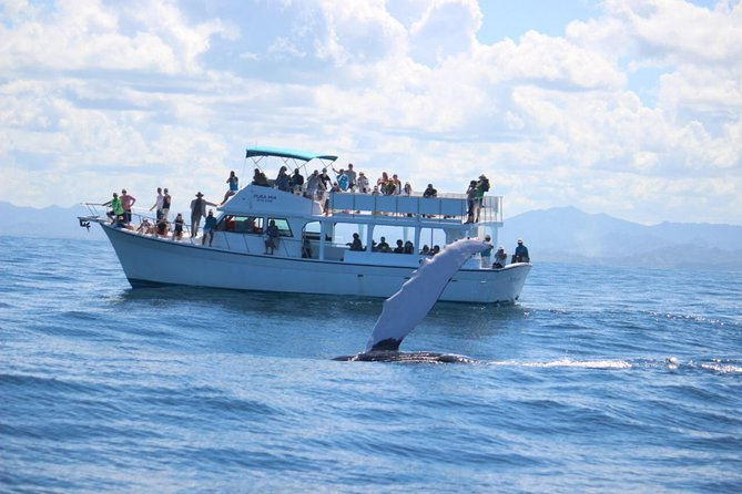 From Puerto Plata-Sousua Famous Whale Samana Cayo Levantado with Whale Biologist photo 8