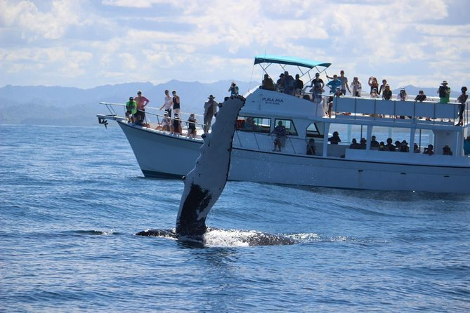 From Puerto Plata-Sousua Famous Whale Samana Cayo Levantado with Whale Biologist photo 2