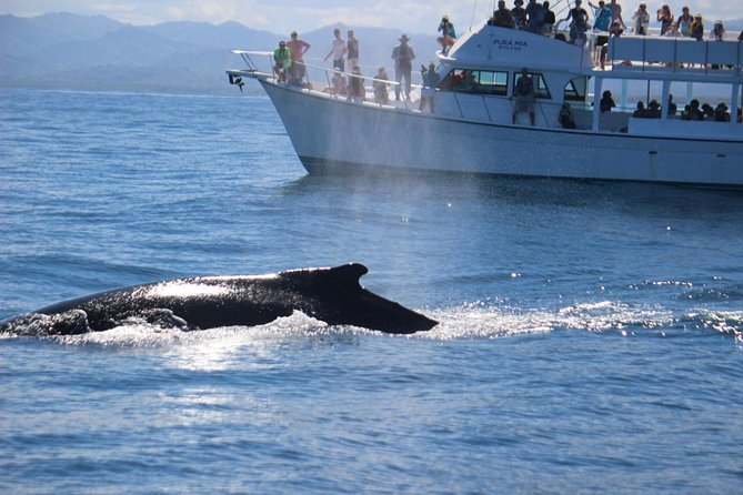 From Puerto Plata-Sousua Famous Whale Samana Cayo Levantado with Whale Biologist photo 6