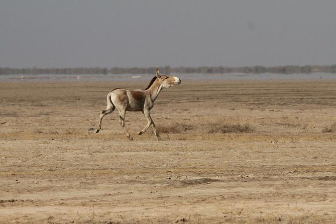 02 Nights & 03 Days Ahmedabad Tour with Little Rann of Kutch