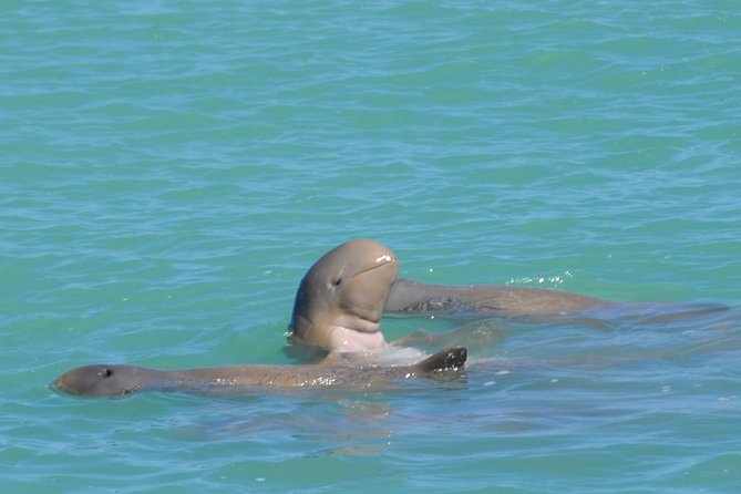 Snubfin Dolphin Eco Cruise from Broome