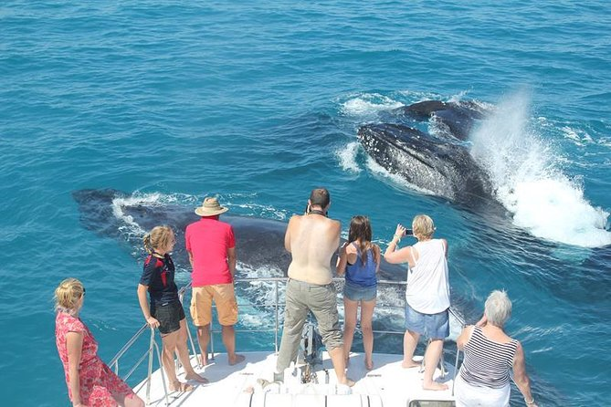 Half-Day Whale Watching Sunset Cruise from Broome