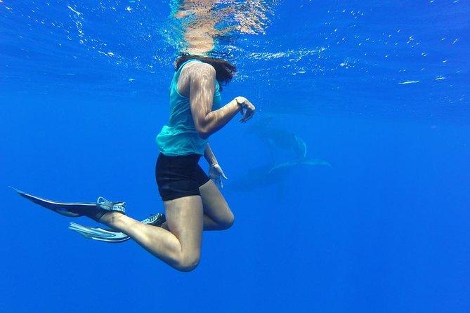 Whale Watching Tours in Bora Bora