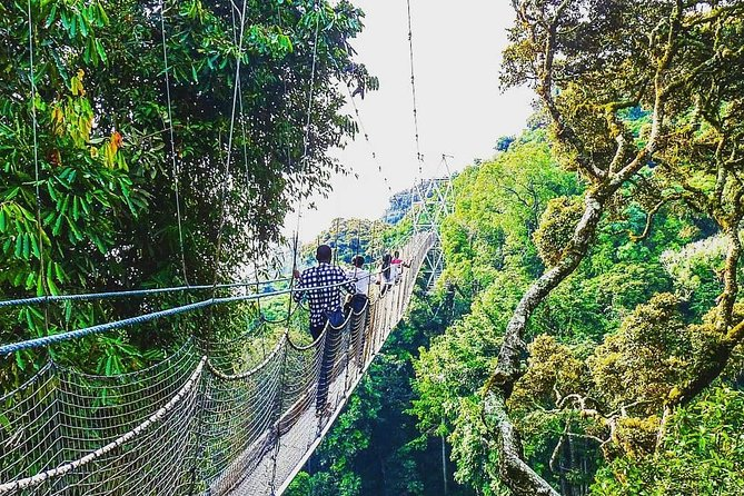 2 Days Nyungwe National Park Hike