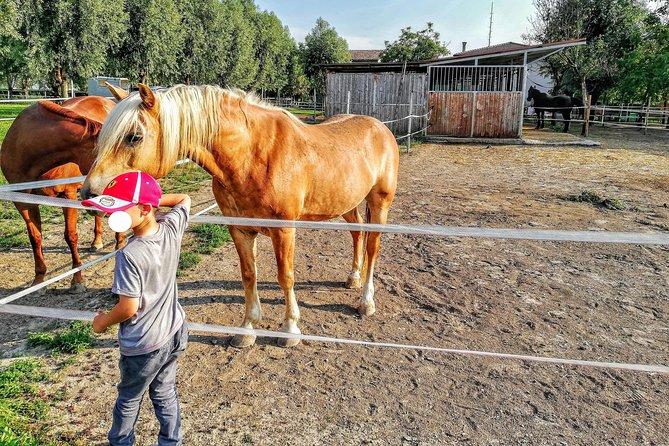 Ride A Horse In Venetian Farm