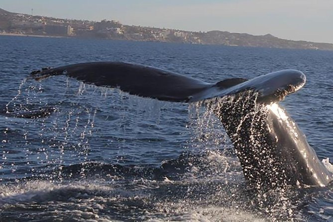 Private Whale Watching Tour in Los Cabos photo 7