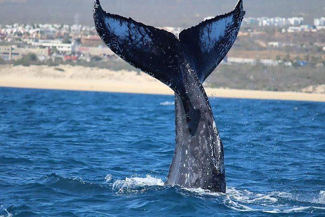 Private Whale Watching Tour in Los Cabos photo 6