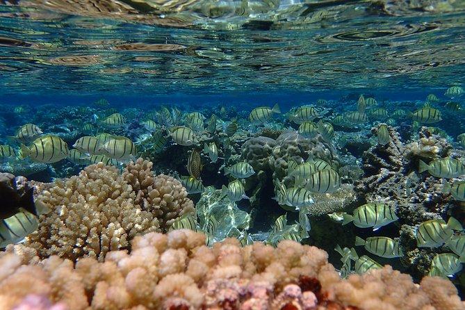 Bora Bora Lagoon Snorkeling Tour by Private Boat