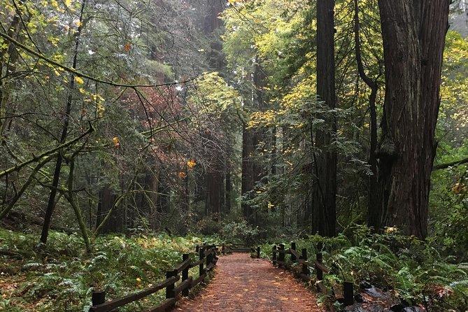 Muir Woods & San Francisco City Tour