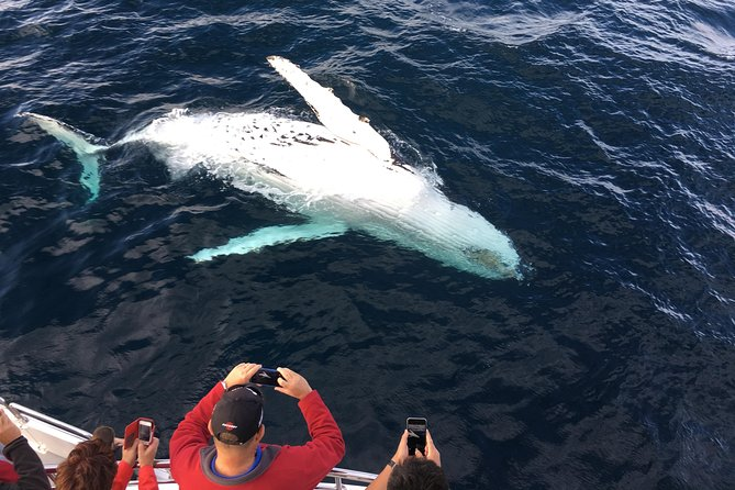 Whale-Watching Expedition i Los Cabos