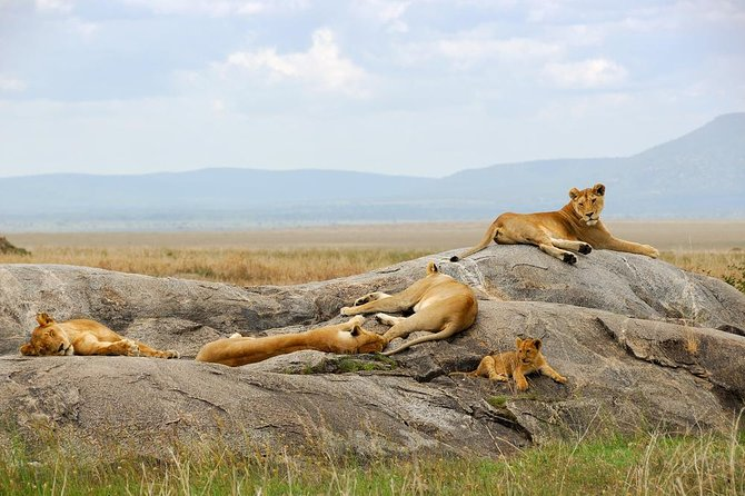5 Day Tanzania Safari in Lake manyara, Serengeti and Ngorongoro Crater