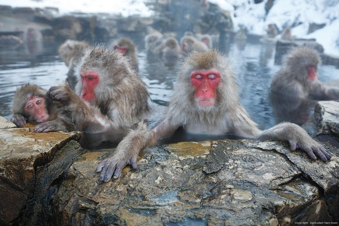 13-hour Snow Monkey&Karuizawa Shopping tour with Private Car to/from Tokyo