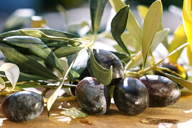 Olive Oil mill visit and tasting in Soller