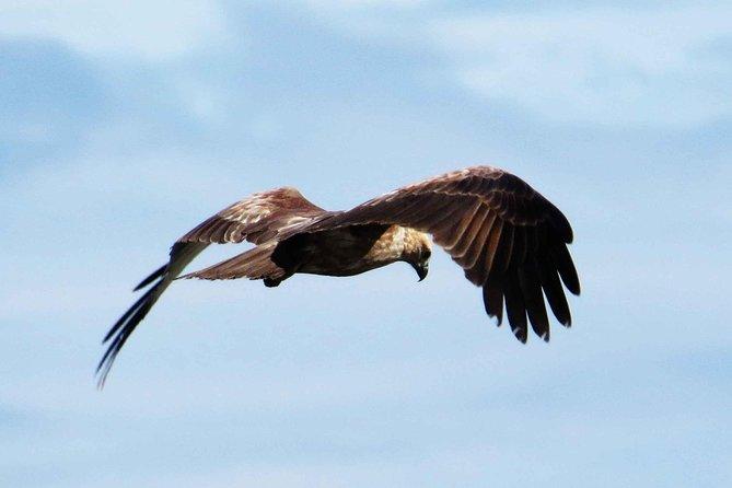 Bird Watching Tour at Muthurajawela