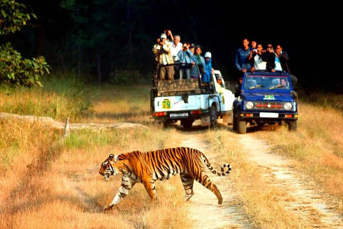 Private Jim Corbett National Park Tour from Delhi - 2 Nights & 3 Days