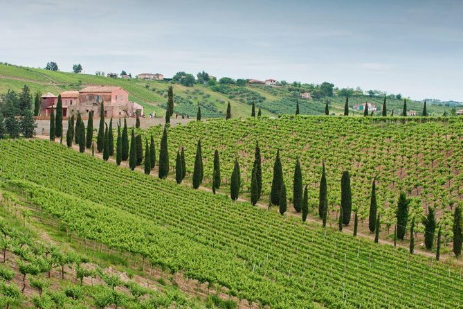 Among ancient sunny vineyards, visit and taste the wines from the San Lorenzo cellar