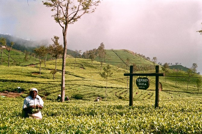 Private Day Tour to Lipton Seat and Dambetenna Tea Factory from Ella