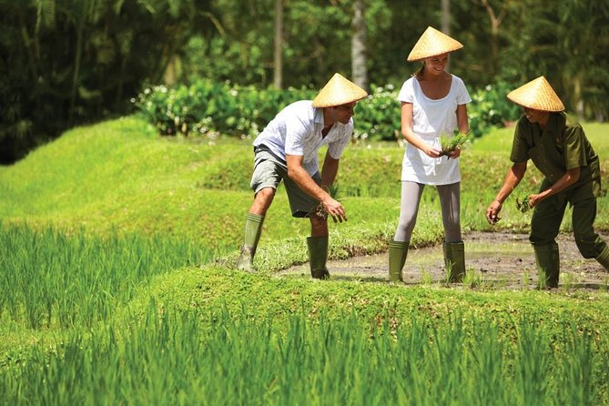 Traditional Bali farming Activities
